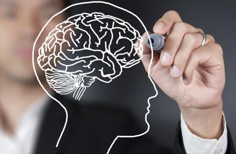 Neuroscience og læring - hvor lærer vi mest?